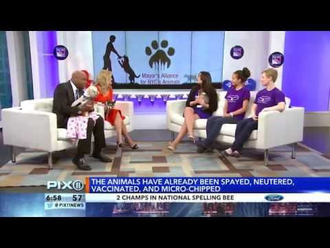 Shows On PIX11 News: Marysol Castro, Kirstin Cole & Andy Adler (5-30-14)