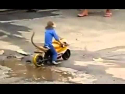 monkey motorcycle accident
